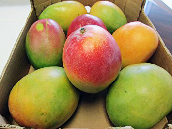 Large Mangoes